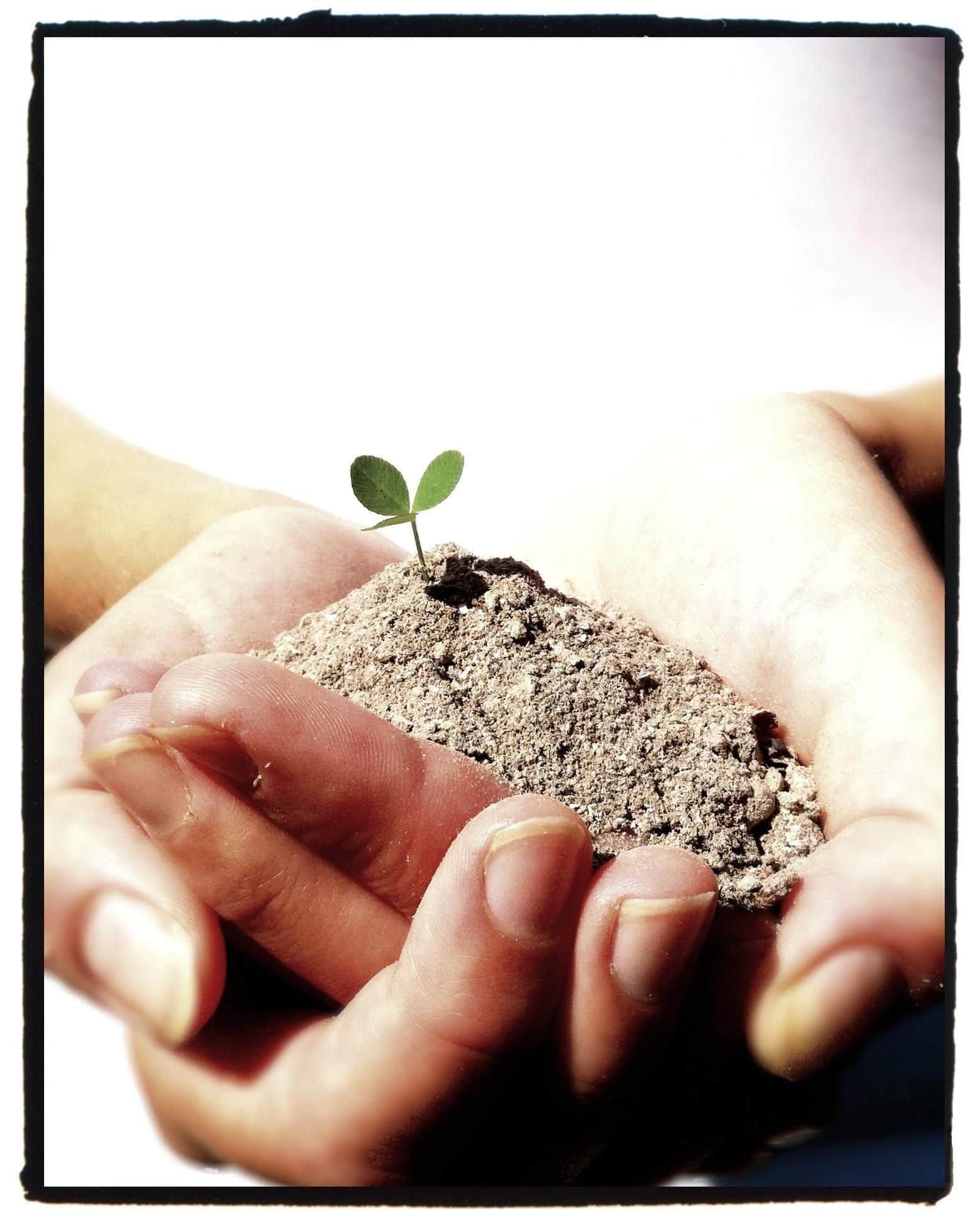 ashes dream meaning, dream about ashes, ashes dream interpretation, seeing in a dream ashes