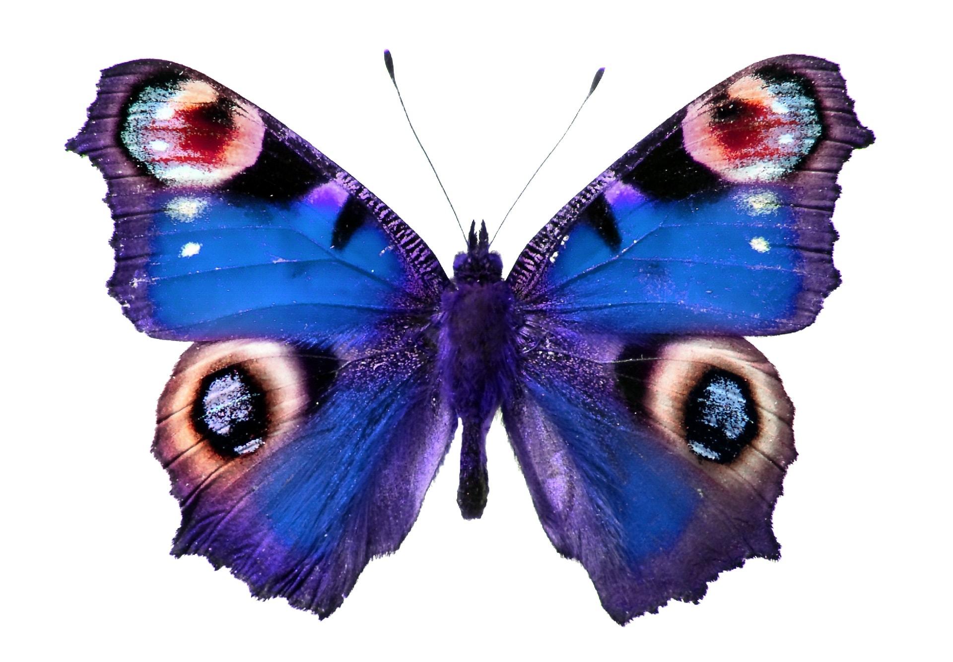 butterfly dream meaning, dream about butterfly, butterfly dream interpretation, seeing in a dream butterfly