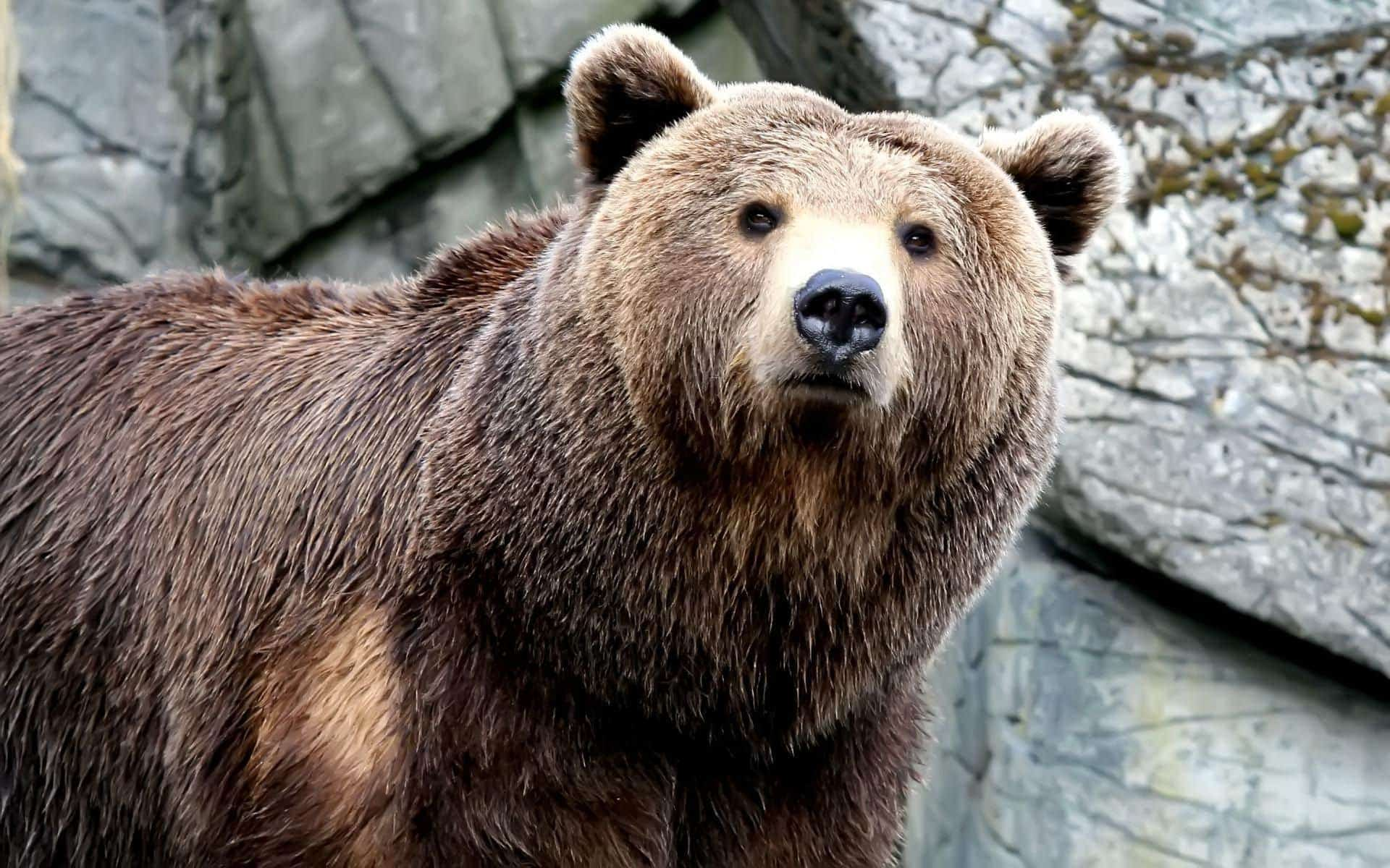 bear dream meaning, dream about bear, bear dream interpretation, seeing in a dream bear