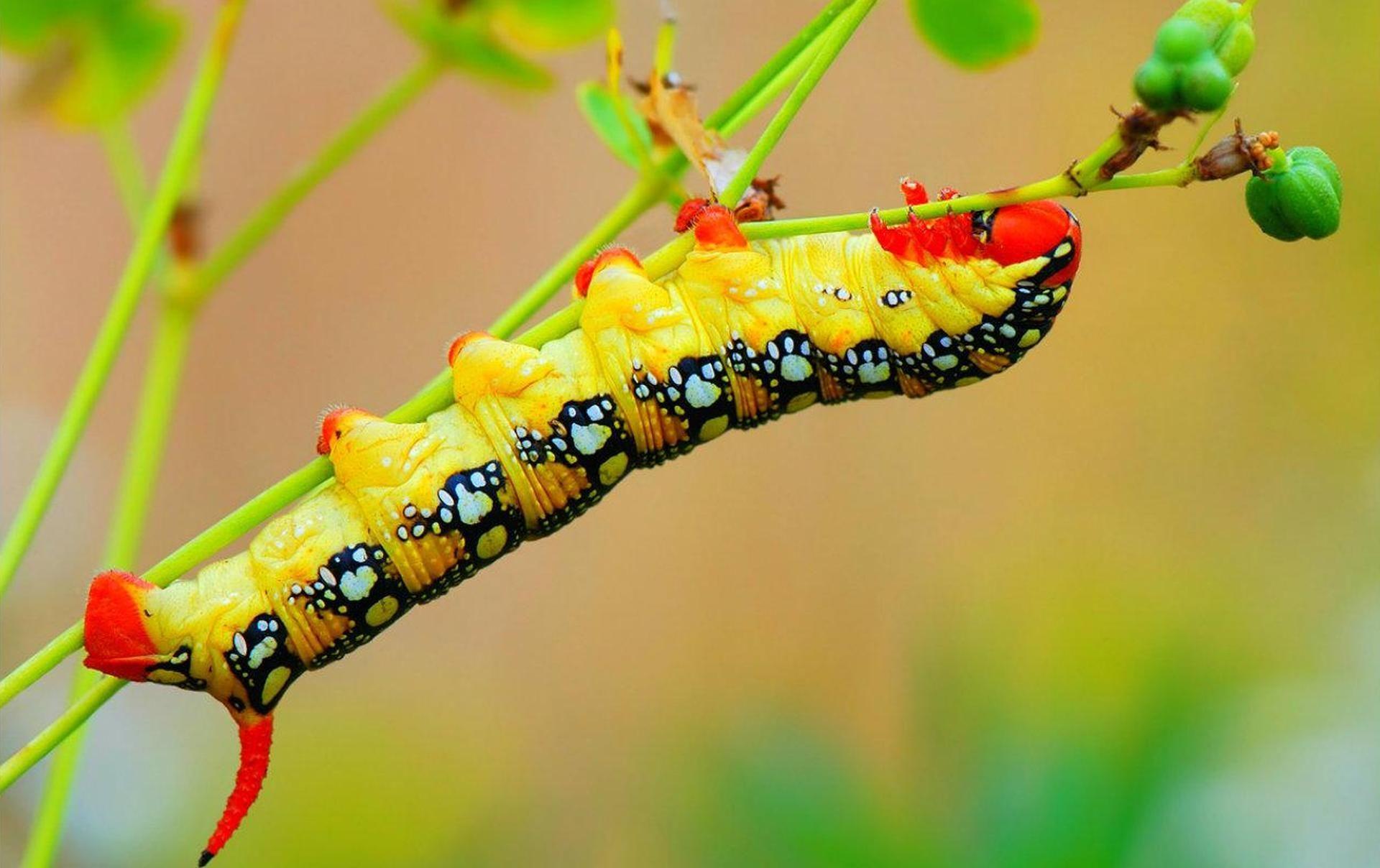 caterpillar dream interpretation